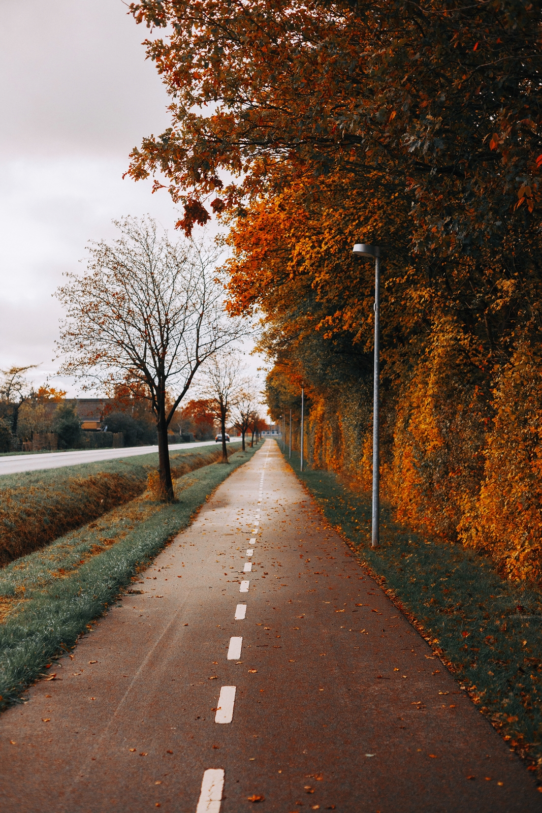 a bike trail with colorful trees and leaves