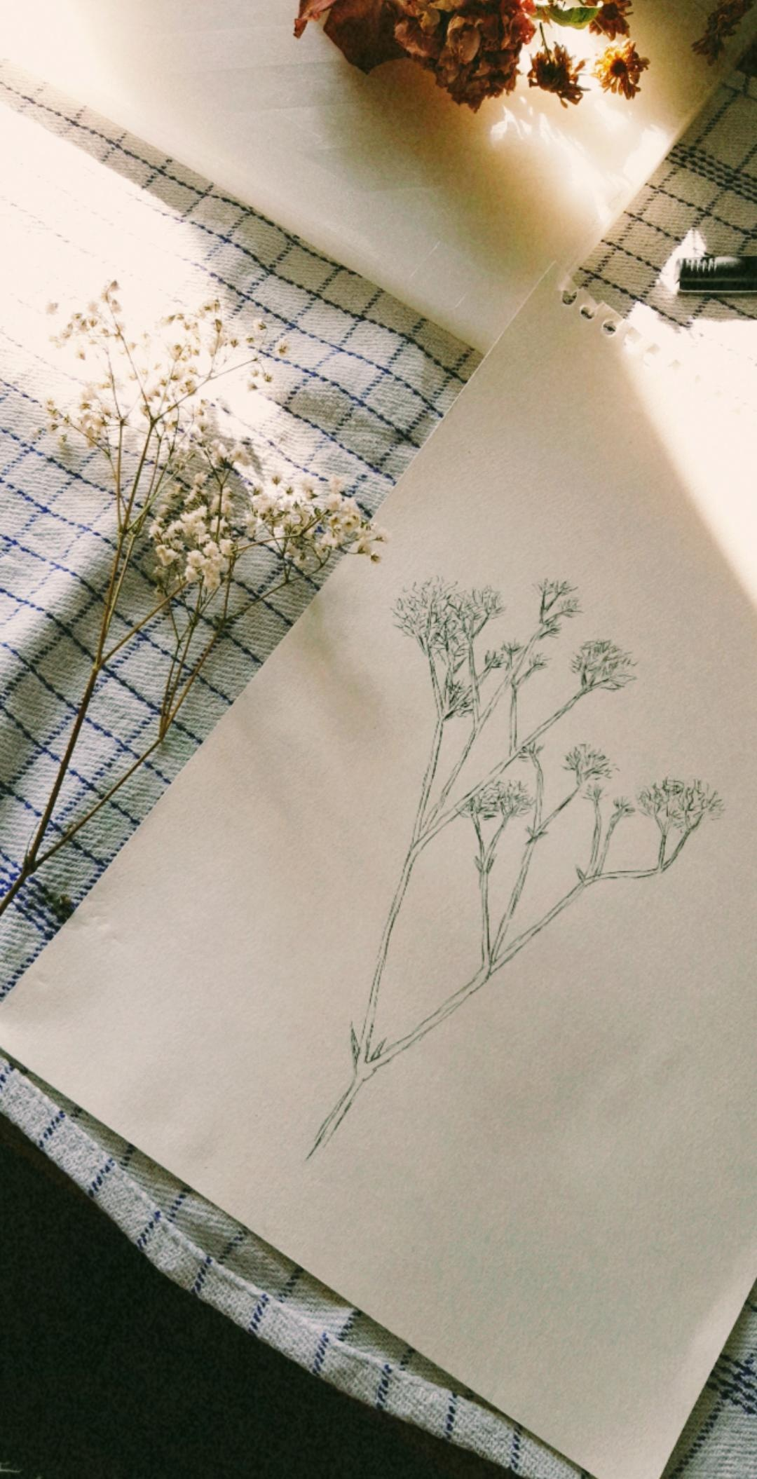 my drawing of dried flowers
